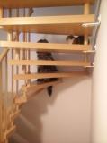 Begegnung auf der Treppe