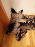 Bergi-Yoga: Der doppelt verdrehte Hund