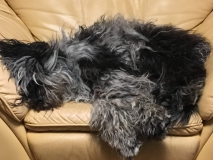 Ein Sessel voller Hund: Hier hilft die Nasen-Regel
