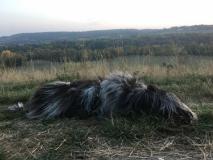 Ein Berg-Hund