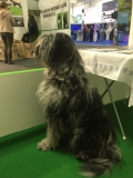 Gaia empfängt die Besucher am Stand, hm, vielleicht hat es ihr auch nur der Beagle am Stand schräg gegenüber angetan.
