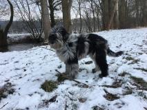 Gaia im Pelzmantel im Schnee, 06.02.2018