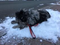 Gaia auf dem Schneehaufen