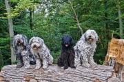 Elwood, Fidelia, Rea und Dr.Pepper fotografiert von Alex