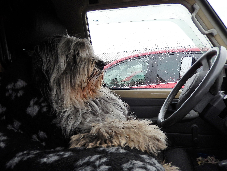 unser cooler Fahrer Foppolo