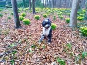 Emillio-Camillo-Hüsselhund Endlich kommt wieder Farbe ins Spiel