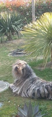 Heike Langer mit Navigo genießt die ersten Sonnenstrahlen im Garten