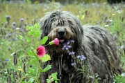 Eija mit Rastafellows Bergamasco