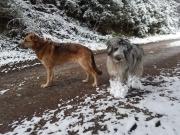 Lea und ihr Buddy Sancho