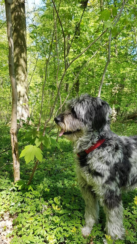 Lucky im Wald
